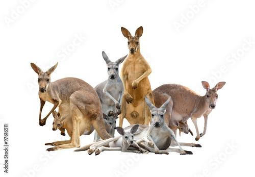 Aluminium Kangoeroe group of kangaroo