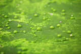 air bubble in algae