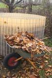 raccolta di foglie secche in autunno