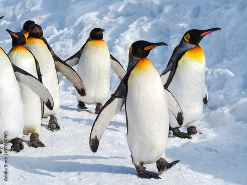 Staande foto Antarctica Emperor penguin walk on snow