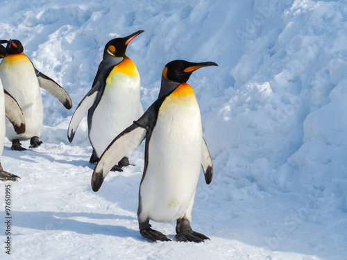 Fotobehang Antarctica Emperor penguin walk on snow
