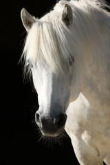 Pferd, Portrait © r_simmer