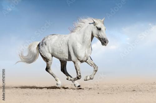 fototapeta na ścianę Horse run gallop
