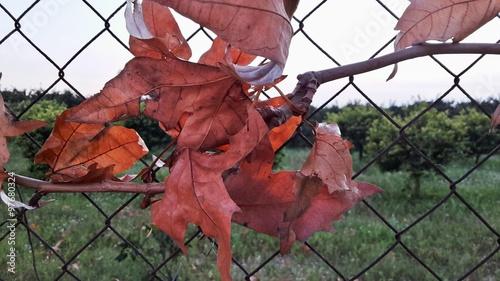 Ramo con foglie intrecciato alla rete imagens e fotos de for Rete con foglie finte