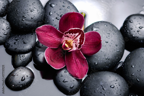 orchid with therapy stones