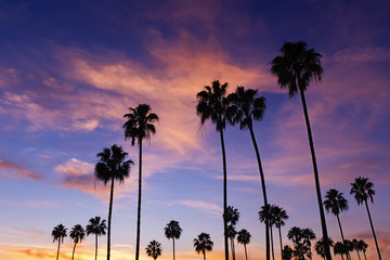 Palm Trees in Sunset at Corona Del Mar Beach, California.