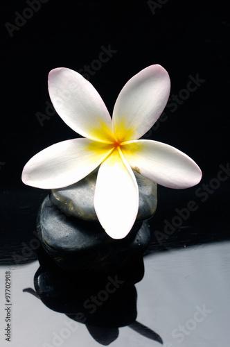 Poster Spa Zen stones and frangipani