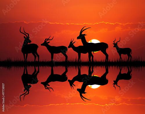 Foto op Canvas Baksteen gazelle silhouette in African landscape