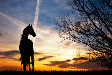 horse silhouette at sunset © adrenalinapura