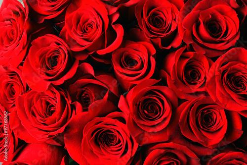 Zdjęcia na płótnie, fototapety, obrazy : red rose background