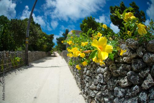 ハイビスカスと珊瑚の道