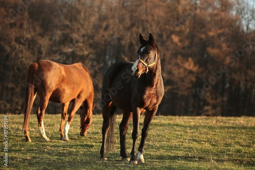 Horse on a background of autumn trees © joda
