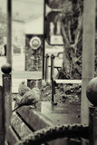Casal de pássaros no banco da praça