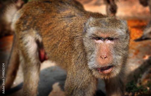 Poster Thailand monkey