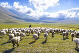 Fototapety pastore con gregge di pecore sui monti Sibillini, Italia