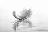Feder auf Wasser Abschied - Fine Art prints