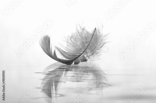 Leinwandbild Motiv Feder auf Wasser Abschied