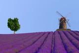 Lavendelfeld mit Mühle und Baum, Südfrankreich