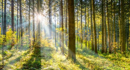 Zdjęcia na płótnie, fototapety na wymiar, obrazy na ścianę : Wald im Sonnenschein