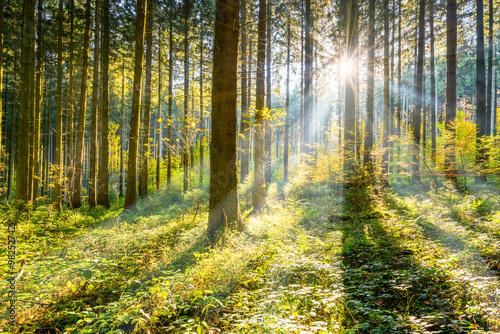 Zdjęcia na płótnie, fototapety, obrazy : Wald im Sonnenschein