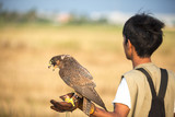 Falconer with Peregrine Falcon crossbred with a Prarie Falcon an