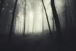 misty dark forest