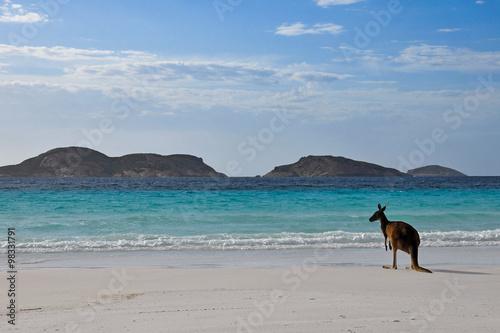 obraz PCV Kangourou Cape Legrand national park 1