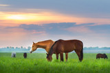 Fototapety Horse herd on pasture at sunrize