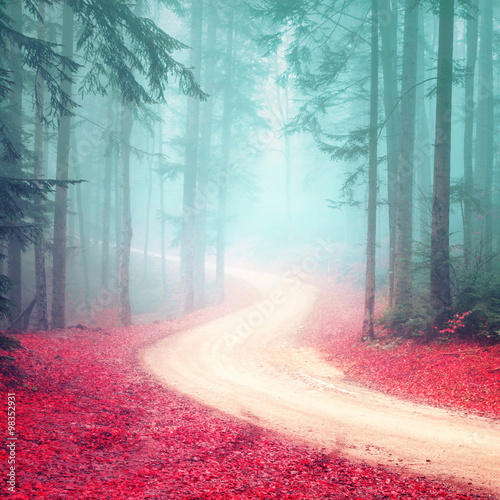 Lovely dreamy seasonal color foggy forest road. Magic color woodland with bright foggy road. - 98352931