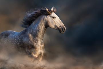 Koń galopujący w kurzu