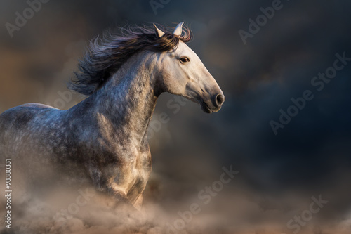 Andalusian horse with long mane run at sunset light in dust