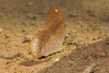 Butterfly on the salt marsh