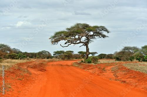 Tree in the savannah of Tsavo