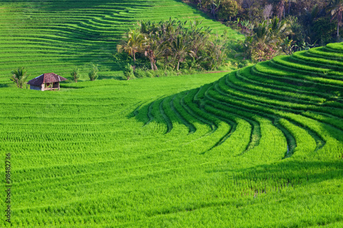 Fotobehang Rijstvelden Beautiful view of Balinese green rice growing on tropical field terraces. Best scenic Asian backgrounds and landscapes, people culture and nature of Bali and Java islands, travel places in Indonesia