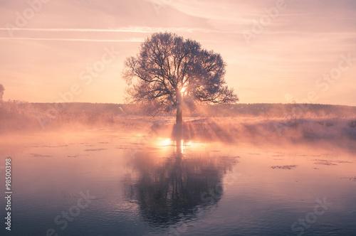 Bright winter sun shines through frosty tree Poster