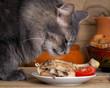 Постер, плакат: Кот смотрит на курицу Блюдо с курицей и нарезанными помидорами Морда кота крупно Кот серый большой Виден язык Кот улыбается