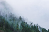 mountain forests covering by fog. - Fine Art prints