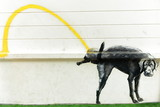 stray dog peeing-graffiti-bangkok