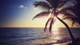 Fototapety Coconut palm tree and scenic sunrise over the beach