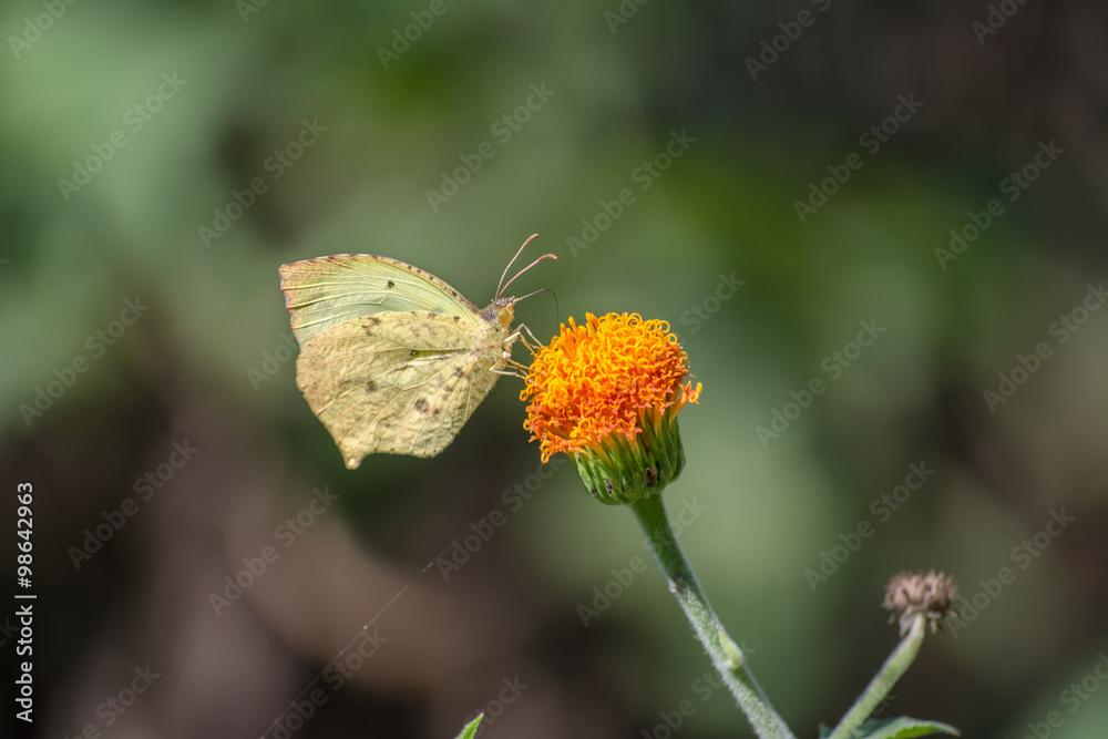 flora kwiat kwiat - powiększenie