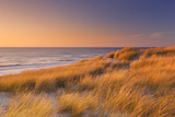 Dunes and beach at sunset on Texel island, The Netherlands - 98667127