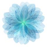Floral round pattern of blue flower petals - 98893330