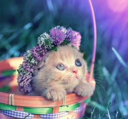 Vintage portret małego kociaka koronowany koniczyna Koronka