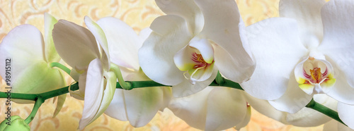 Panel Szklany Flowers white orchid