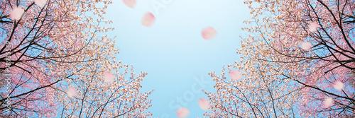 桜 バナー  Poster