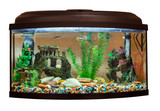 Beautiful rectangular aquarium on white background - 98960505