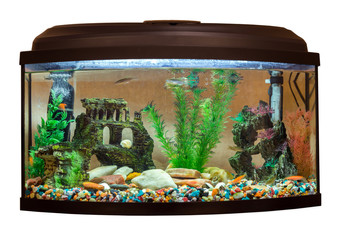 Beautiful rectangular aquarium on white background