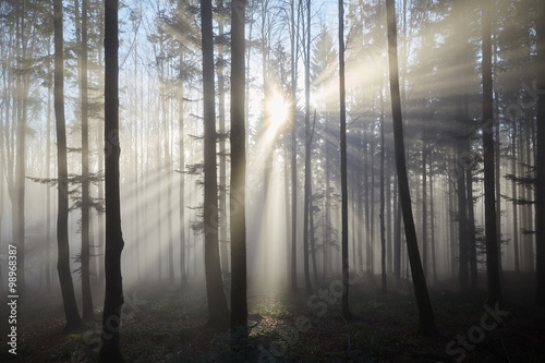 Sun rays through the foggy forrest - 98968387