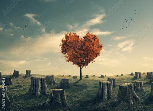 Zdjęcia na płótnie, fototapety na wymiar, obrazy na ścianę : Heart shaped tree in cleared forest