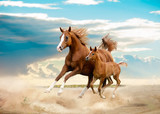 arab mare and foal running in desert - 99078302